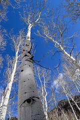 Winter Tree (Toasto) Tags: telluride winter colorado snow trees tree white cold january