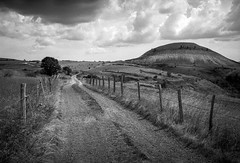 (Paysage du temps) Tags: 2019 france film landscape paysage campagne ilford chemin cevennes leicam6 lozere panf50 summicron35mm 20191027 clouds wire cows path nuages barbed vaches cloture barbeles