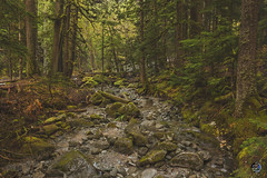 Deception creek 2019 (TheArtOfPhotographyByLouisRuth) Tags: creek water tree treemendous treelimb outdoorwashington landscape louisruthphotography nikond810 wildlifeandthewild thebestshots flickraward flickrexpert ᗪiscoveryᗯorld beautifulcapture