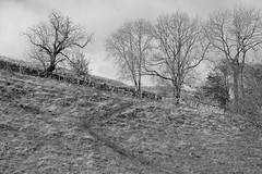 HillsidePath (Tony Tooth) Tags: nikon d7100 sigma 70mm field path pathway footpath countryside hillside bw blackandwhite monochrome alstonefield staffs staffordshire