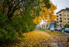 Vyborg, Russia 2019 (Катя) Tags: vyborg vyborglibrary alvaraalto viipuri viipurinkirjasto venäjä karjala russia