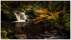 Falls at Padley Gorge (KT Photography.) Tags: stone moss england water stream peakdistrict 6dmk2 rocks leaves eos waterfalls uk falls photography landscape trip padleygorge golden canon ktphotography october2019 hope unitedkingdom