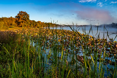 Fall morning mist at the lake (asonyphotographer) Tags: kansascity kansas unitedstatesofamerica lake park county wyandotte mist water fall brown green lillies reeds trees leaves sky blue clouds fog geese flock sony ilce7rm3 7rm3