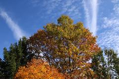 Fall Colors (Diane Marshman) Tags: autumn fall pine season maple oak foliage blue red sky orange cloud white color tree green colors yellow state pennsylvania formation pa nature bradford pear