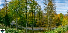 Couleurs de l'automne - Vallée de Barétous (https://pays-basque-et-bearn.pagexl.com/) Tags: 64 altitude aquitaine béarn coline buch france lanneenbarétous nouvelle pyrénées atlantiques haut montagne nature sudouest vallée du barétous