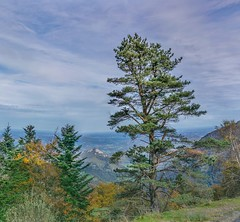 Couleurs de l'automne (https://pays-basque-et-bearn.pagexl.com/) Tags: 64 altitude aquitaine béarn coline buch france issarbe lanneenbarétous nouvelle pyrénées atlantiques haut montagne nature sudouest vallée du barétous