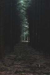 Hagen - 05 (Shigeako) Tags: wood forest germany woods german wald hagen wälder autumn fall herbst halloween dark lost dangerous spooky dunkel gefährlich verloren gruselig