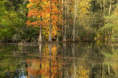 Am Ententeich Stadtpark (Elbmaedchen) Tags: stadtpark wasserzypressen bäume trees water reflektion reflection autumn herbst herbstmotiv herbstfarben wasserspiegelung nature natur fall colours ententeich see winterhude park teich
