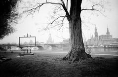 Canalettoblick Dresden (Veit Schagow) Tags: dresden schwarzweissfilm agfaapx400 agfa apx400 bnw blackandwhite canalettoblick terrassenufer koenigsufer schwarzweiss
