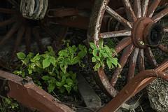 Rural living at Chippewa Nature Center - Midland (TAC.Photography) Tags: history wagon wheel rural country puremichigan