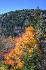 Mt. Hardy, Haywood County (esywlkr) Tags: landscape autumn fall color nc haywoodcounty northcarolina nature woods forest pisgahnationalforest