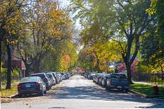 Autmn Colors come to Logan Square (bmayzure) Tags: leaves colorful logansquare chicago illinois trees fall autumn loganboulevard