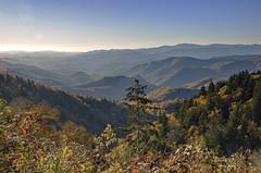 Blue Ridge Parkway In Autumn (mevans4272) Tags: autumn parkway ridge blue overlook trees sky mountains nc landscape
