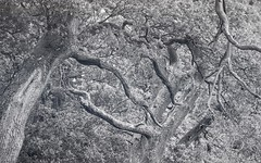 Tree Abstracts (ShinyPhotoScotland) Tags: art nature weather places scotland perthshire seasonal toned autumn flora trees abstractqualities monochrome blackandwhite auchterarder johnnymathiewalk