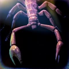 Fake, Fake, Fake (clarkcg photography) Tags: fake macro scorpion bug plastic macromondays 125inchsquareframe