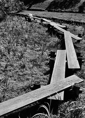 Swamp Walkway (Chris McMahen) Tags: walkways swamps koishikawa korakuen gardens