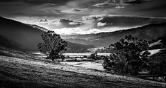 Mountain View # 12 (Graeme O'Rourke) Tags: lrcf2j0328v4 licola victoria australia mountains glenfalloch blackandwhite trees fields paddock river storm clouds bw inexplore28112019