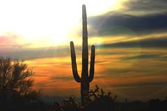 Lost in time... (jeffr71) Tags: saguaro lostdutchman arizona cactus sunset sky clouds light