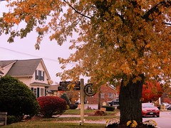 Autumn Scene In Chelmsford, MA. #1 - Photo Taken by STEVEN CHATEAUNEUF On October 25, 2019 (snc145) Tags: autumn fall seasons sky tree grass bushes house sign street car nature outdoor photo chelmsford massachusetts usa october252019 stevenchateauneuf foliage flickrunitedaward vividstriking