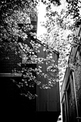 Spring leaves (Indigo Skies Photography) Tags: carlzeissjenabiotar58mmf2 carlzeiss jena biotar vintagelens germanlens leaves trees spring city street buildings melbournecbd melbournecity blackandwhite mirrorless sonya7ii sony sky skyscraper skyline