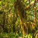 Hoh Rainforest 3