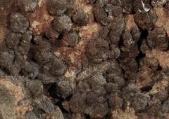 Clinoptilolite - Ca (Ron Wolf) Tags: clinoptilolite earthscience geology mineralogy mthoodnationalforest rwpc crystal macro mineral monoclinic nature tectosilicate zeolite oregon
