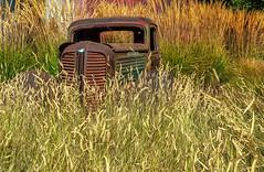 Hidden (larwbuck) Tags: autumn california fall grass metal object old rust truck vehicle