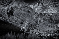 EALING 113 (Nigel Bewley) Tags: walpolepark ealing london england uk walledgarden gardenwall unlimitedphotos nigelbewley photologo october october2019 canonef1635mmf28liiusm canon5dmkii 830nm infrared digitalinfrared advancedcameraservices blackandwhite blackwhite creativephotography artphotography amateurphotographer appicoftheweek