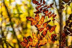 After Glow (*Capture the Moment*) Tags: 2018 2019 backlight backlit bäume filze fotowalk gegenlicht inzell landschaften sonya6300 sonye356318200oss sonyilce6300 trees