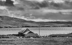 Fish & sheep farm (Zoom58.9) Tags: sky clouds hills ocean sea water fishfarm seascape landscape outside house europe shetland shetlandisland monochrome bw himmel wolken hügel meer wasser fischfarm seelandschaft landschaft draussen haus europa sw sony sonydscrx10m4