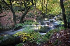 Padley Gorge (Carol Christine Hall) Tags: stream padleygorge peakdistrict trees water waterfall england