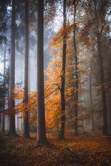 Nebulaphile (der_peste (on/off)) Tags: mist fog misty foggy mood moody forest autumn fall colors autumncolors orange red leaves branches trees woods woodland