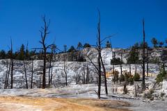 lifeless atmosphere at Angels Terrace (kleiner_eisbaer_75) Tags: yellowstone nationalpark usa wyoming natur nature geothermal mammoth hotsprings leblos bäume farben angels terrace engelsterrasse schneeweis kalkstein mineralien thermalquelle kalksinterterrassen