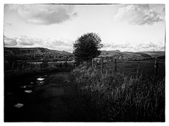 Up the lane (Missy Jussy) Tags: upthelane newhey rochdale landscape lancashire lane path rural england sky clouds trees view village fence puddle grass fields iphone outdoor outside mono monochrome blackwhite bw blackandwhite northwest justinestuttard