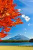 璀璨秋楓(DSC_5887) (nans0410(busy)) Tags: japan yamanashiprefecture autumn maple redleaves fujiyoshida fujifivelakes fujihakoneizunationalpark fujikawaguchiko mountfuji fujisan lakeshoji fujigoko landscape scenery landspace 日本 山梨縣 秋天 富士山 富士五湖 富士箱根伊豆國立公園 富士吉田市 南都留郡 子抱き富士 精進湖 東洋瑞士 紅葉 楓葉 shojiko