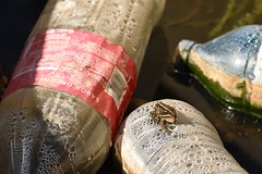Frog among plastic. (Sky and Yak) Tags: perezs water frog amphibian plastic rubbish bottle drain plasticbottle polloution spain pelophylax perezi iberian