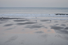A Place to Themselves (esallen52) Tags: coast beach seagulls birds winter outdoors shore sea sand daytime