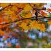 Deep into Autumn