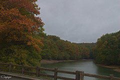 Los lunes de octubre...282/365 (cienfuegos84) Tags: leaf autumn otoño river río bosque arboles nature naturaleza