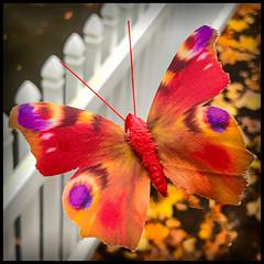 Butterfaux (Timothy Valentine) Tags: foliage butterfly fake 1019 macromondays 2019 home fence eastbridgewater massachusetts unitedstatesofamerica