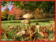Autumn Colours (maryimackins) Tags: autumn colours fungi sheffield park mary mackins