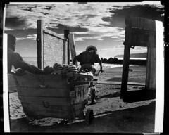 4x5-190-011060 (ndpa / s. lundeen, archivist) Tags: nick dewolf nickdewolf bw blackwhite photographbynickdewolf 1950s late1950s film 4x5 largeformat sheetfilm monochrome blackandwhite 1958 jamaica street worker workers cart wagon wheelbarrow bananas haul hauling load westindies caribbean montegobay people beach clouds gate doors sand push pushing horseshoe horseshoes sign pepsi pepsicola jamaican man men montage photomontage cutandpaste