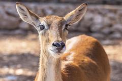 Fasano Zoo (Tiziana de Martino) Tags: fasano zoo safari puglia italia italy italian animal park visit