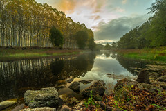 Misty River (Artur Tomaz Photography) Tags: river water trees nature outside mist misty green yellow sunrise rock tranquility