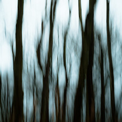 Autumn Afternoon In Woods 036 (noahbw) Tags: d5000 icm nikon abstract autumn blur branches distortion forest intentionalcameramovement landscape lines motion movement noahbw square treetrunk trees woods prairiewolfsloughforestpreserve