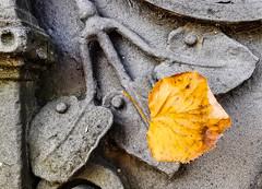 UDINE. CANCELLATA (PARTICOLARE) (FRANCO600D) Tags: foglia leaf autunno hoja blatt herbst otoño ferrobattuto fregio cancellata ferro iron decorazione smartphone macro macrofotografia huawei mate20pro franco600d