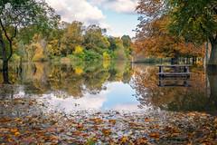 Autumn flood... (Kerriemeister) Tags: autumn autumnal flood fulford riverouse riverbank river york yorkshire leaves trees reflection sigma2470 nikond5300