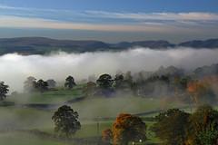 Autumn (vincocamm) Tags: mist misty fog foggy trees fields grass hills mountains cumbria landscape autumn cows orange green blue agricultral farm nikon d5500 cold frosty sun sunny