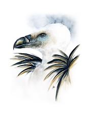 Illustration vautour fauve (fleurbleue31) Tags: aquarelle vautour illustration ornithologie