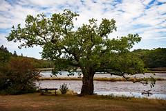 Auprès de mon arbre.... : au bord de la Laïta  II (.Sophie C.) Tags: cloharscarnoët 29 finistère bretagne breizh abbayesaintmaurice ria rivière laïta arbre banc chêne